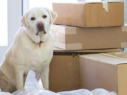 Dog beside moving boxes