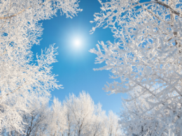 Blue sky with trees covered in frost